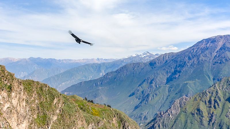 Day 8: COLCA CANYON / CONDOR CROSS / PUNO